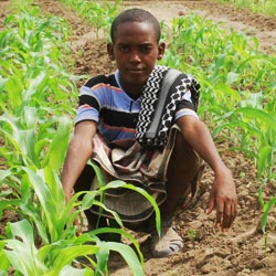 A future Afar farmer in his field